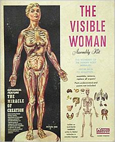 visible-woman