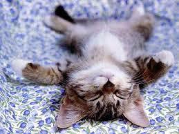 cat REALLY napping