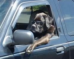 stuck in traffic poor dog