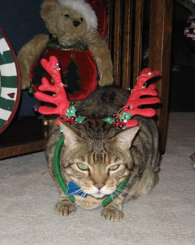 cats dressed for Christmas – EXIT ONLY