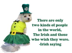 the irish (& the dogs?)