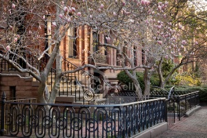 Back Bay Magnolias