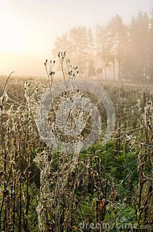 meadow-covered-spider-webs-28682964