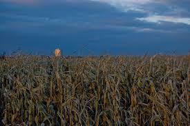 cronfield at dusk