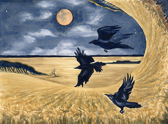 crows over a cornfield