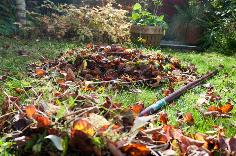 raking leaves 2