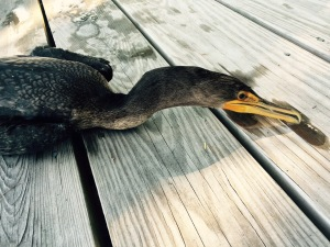 the cormorant in death 2
