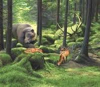 sleeping in the woods (1)
